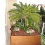συντηρηση κηπου στη γλυφαδα,συντηρηση κηπου στη Γλυφαδα, συντήρηση κήπου στη Γλυφάδα