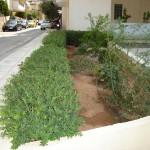 κήπος, αυτόματο πότισμα, aytomato potisma, kipos, κηπος στη νεα σμυρνη