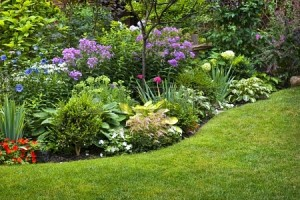 15391768-lush-landscaped-garden-with-flowerbed-and-colorful-plants